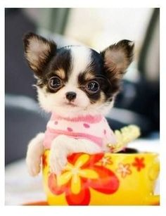 Love it! I want this cute dog!