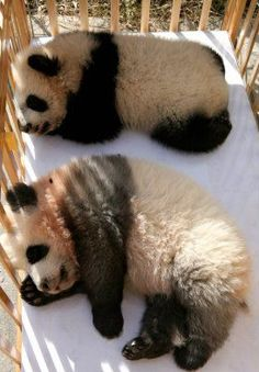 I want to nap with them!