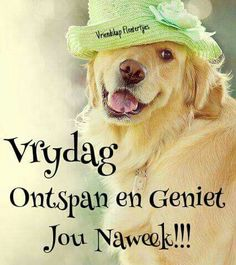 Friday Messages, Friday Wishes, Happy Friday, Good Morning Good Night, Good Morning Quotes, Friday Qoutes, Greetings For The Day, Afrikaans Language, Sheep Cartoon