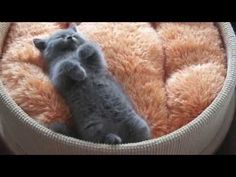 Cute/Funny Kitten/Cats And Puppies/Dogs Compilation 2013 EPIC - 10 Minutes! [HD] - YouTube