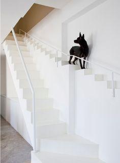 Alternatieve trap voor de hond.
