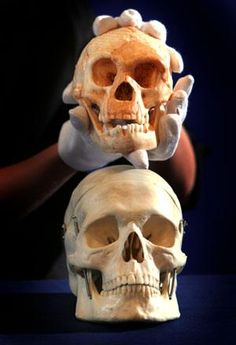 skull of a modern human (bottom) with the grapefruit-sized skull of a Homo floresiensis (Image: Rex) Biological Anthropology, Forensic Anthropology, Early Humans, First Humans, Petite Fashion, Curvy Fashion, Fall Fashion, Style Fashion, Homo Floresiensis
