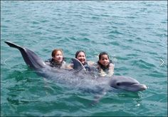 Donna Maria, IBN's Founder & CEO, and her children swim with Ziggy the Dolphin on Grand Cayman Island.