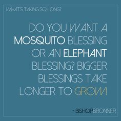 A mosquito blessing or an elephant blessing? Bishop Dale C. Bronner #quote