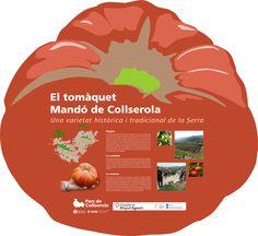 La història del tomàquet Mandó de Collserola a les Jornades de la Vinya i el Vi (Can Coll, 10 de maig de 2013) http://www.parcnaturalcollserola.cat/news/arrenquen-les-vi-jornades-la-vinya-i-el-vi-a-collserola . Demaneu-nos llavors d'aquesta retrobada hortalissa!