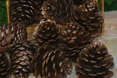 Bronze Pine Cones Pinecones Natural Pinecones winter by Teakberry Pine Cone Decorations, Wedding Decorations, Christmas Decorations, Christmas Tree, How Beautiful, Beautiful Homes, Scented Pinecones, Cinnamon Essential Oil, Gifts Under 10
