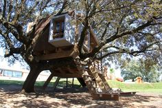 Rooted treehouse in a centennial oak