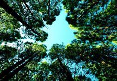 💬 New free photo at Avopix.com - blue sky trees     ✅ https://avopix.com/photo/17833-blue-sky-trees    #tree #blue #sky #oak #trees #avopix #free #photos #public #domain