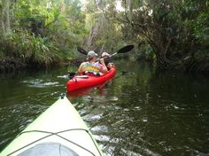 Karen's Kayaks in Melbourne Florida is a great way to see the REAL Florida.  5 stars!!