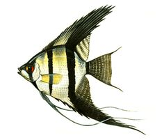 """Image # 2. My brother and I spent our allowance on baseball cards and candy at the Five & Dime on Main Street. One day, he proposed we put our money together & buy an aquarium. With live fish! I It took some convincing, but I agreed. We researched together. I liked the angel fish and tetras. I didn't like the cleaning. (Why did I have to do it?) Project: """"Assemble 10 images, books, films, music/songs that provide a history & context for your current work in art, animation, gaming."""""""