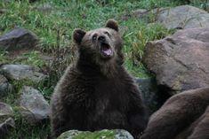 15 divertentissime foto di animali davvero poco fotogenici!