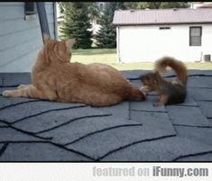 Squirel Vs Cat Fighting