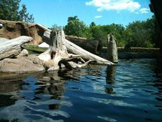 river otter exhibit-Potawatomi zoo