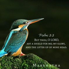 PERFECT PEACE I have found in my JESUS, He will deliver me from all evil. And when my heart troubled me, He is my HOPE ! Joy comes in the morning, troubles won't last.. Jesus is coming back at anytime now. He is my GLORY, #MARANATHA Psalms 3:3-6 (KJV) But thou, O LORD, art a shield for me; my glory, and the lifter up of mine head. I cried unto the LORD with my voice, and he heard me out of his holy hill. Selah. I laid me down and slept; I awaked; for the LORD sustained me. I will not be…