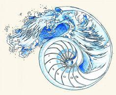 nautilus shell | Tumblr