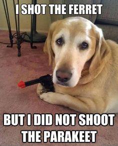 #Pun - I shot the ferret but I did not shoot the parakeet