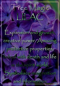 Purple - TREE MAGIC LILAC - Expansion and growth, creative power. Amazing protective properties, linked with death and life in the spirit world. Symbolises imagination and information. Magic Herbs, Herbal Magic, Plant Magic, Magick, Witchcraft, Wiccan Spells, Lilac Tree, Hedge Witch, Kitchen Witch