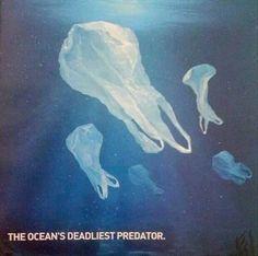 Ocean's deadliest predator