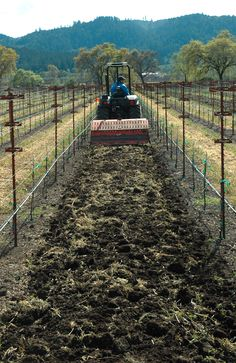 After being spread between vine rows, the compost is worked into the soil with a tractor-mounted rotovator.
