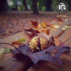 presents: SPECIAL MENTION AUTUMN   @my_shadows_ FROM   @ig_ivrea ADMN   @cecilianmd F E A U T U R E D  T A G   #ig_ivrea #ivrea #canavese M A I L   igworldclub@gmail.com S O C I A L   Facebook  Twitter L O C A L  S O C I A L   Ig Piemont Crew M E M B E R S   @igworldclub_officialaccount C O U N T R Y  R E Q U I R E D   If you want to join us and open an igworldclub account of your country or city please write us or go to www.igworldclub.it F O L L O W S  U S   @igworldclub @ig_Piemonte…
