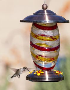 Going hummingbird crazy over here! Checkout this pic of our new multi-color painted glass  and copper hummingbird feeder we just got for our hummers...  http://www.amazon.com/gp/product/B0112YQ52O  Our hummers LOVE it!