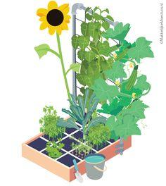 Jelle's Makkelijke Moestuin - Makkelijke Moestuin. Site vol info over gemakkelijk groente kweken.