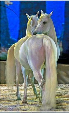 Cavalia - Liberty. If you love horses, you must see this show.