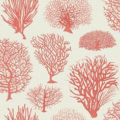 Staghorn and Ivory Tree are just some of the coral species represented in this classic wallpaper inspired by antique botanical prints from the late Placed on a subtle background of Cole & S