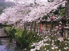 Sakura Kaiseki (April 1st - 30th)