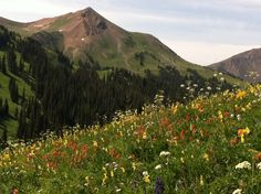 An assortment of wildflowers on the West Maroon Trail near Crested Butte.