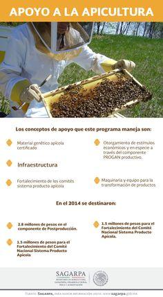 Apoyo a la apicultura. SAGARPA SAGARPAMX #SomosProductores