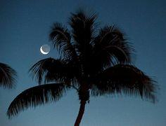 Moon rise Florida Keys Island Girl, Island Beach, Island 2, Most Beautiful Beaches, Beautiful World, Beautiful Things, Key Instagram, Florida Palm Trees, Moon Rise