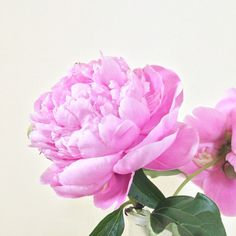 Everything you need to know to grow peonies in your perennial flower garden, plus 5 easy flower arrangements even a beginner can do. Growing Peonies, Flower Arrangements Simple, Plastic Flower Pots, Starting A Vegetable Garden, Garden Of Earthly Delights, Floral Hoops, White Peonies, Planting Bulbs, Garden Projects