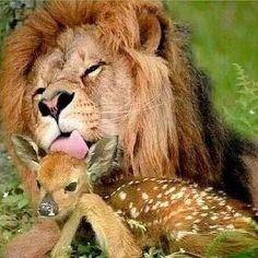 Not Lunch, Just Affection...
