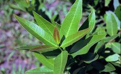 Un truquito para que nuestras plantas luzcan relucientes y en buenas condiciones siempre.