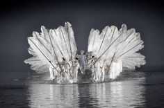 The Lake Swan Rises - Impression West Lake = Hangzhou, China