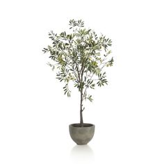 Convincing and carefree stand-in branches the graceful branches and lance-shaped slivery leaves characteristic of a real olive tree.  Potted in a clean, rounded concrete container. Plastic, wire, polyester and foamCement potFor indoor use onlyDust with soft clothMade in China.