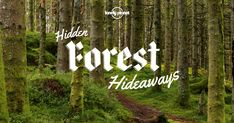 Get lost in a canopy of trees and explore some of the world's most fascinating forests with these articles and travel tips.