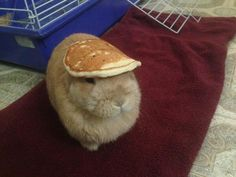 Hosted by imgur.com ...cause how many times have you seen a bunny with a pancake on his head =)