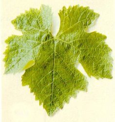 or grape leaf? Especially in autumn colors, representing ALL autumn leaves...