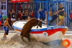 torodigital: Primera tarde de concurso en les Penyes en Festes...