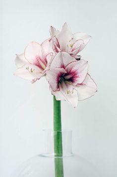 Vase, Flowers, Instagram, Home Decor, Decoration Home, Room Decor, Vases, Royal Icing Flowers, Home Interior Design