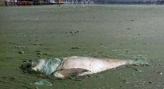 More dead fish.
