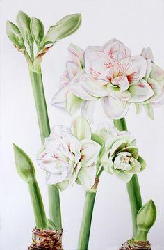 Botanical,