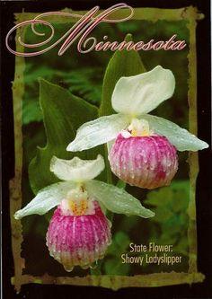 Minnesota State Flower Lady slipper -flowers about June | Tattoo ...