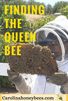 Learning how to find the queen bee is a skill that takes practice! Enjoy this fun slide show. Can you find the queen ?