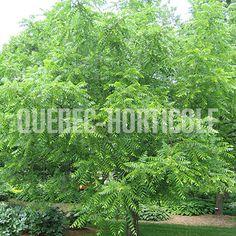 Quebec-horticole.ca - Photos de plantes et fiches descriptives détaillées Quebec, Dimensions, Outdoor Structures, Photos, Gardens, Flower Colors, Index Cards, Plants, Pictures
