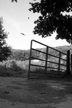 The open gate #enixphotos