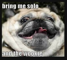 Bring me Solo...and the Wookee