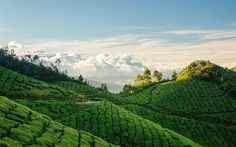 Download wallpapers India, tea plantation, hills, mountains, summer